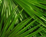 palm_leaves_wallpapersuggest_com-1280x1024